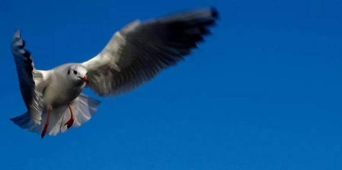 Terbang by Donald Dee